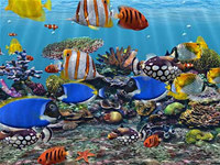3D Fish School Screensaver screenshot medium