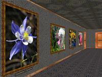 Phota Flowers Screensaver