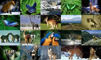 Animals Photo Screensaver Volume 2