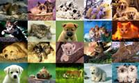 Animals Photo Screensaver Volume 3