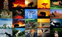 Animals Photo Screensaver Volume 5