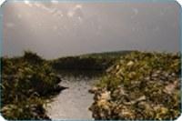 River Rays Screensaver