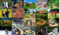 Animals Photo Screensaver Volume 1