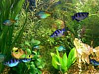 Aqua 3D Screensaver