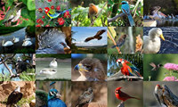 Birds Photo Screensaver