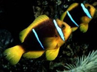Hypno Fish Screensaver