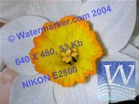 AiS Watermarker ActiveX