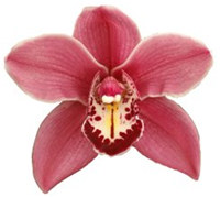 Care of Orchids