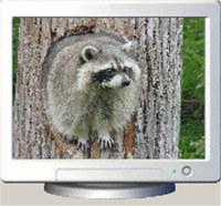 Furry Critters Screensaver