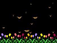 Butterfly Garden Screensaver screenshot medium