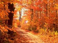 Colors of Autumn DesktopFun Screens...
