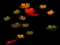 Autumn Leaves Screensaver