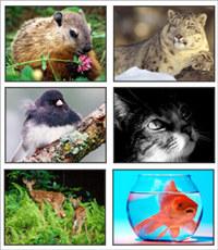 HQ Animal Close Ups Screensaver 2