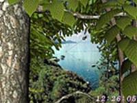 Living Forest 3D Screensaver