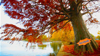 Autumn Willow Pond HD ScreenSaver
