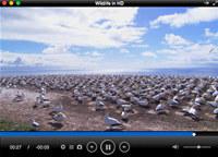 Total Video Player Pro for Mac screenshot medium